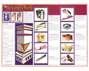 The Beekeepers World – Chart
