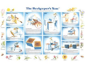 The Beekeepers Year- Chart